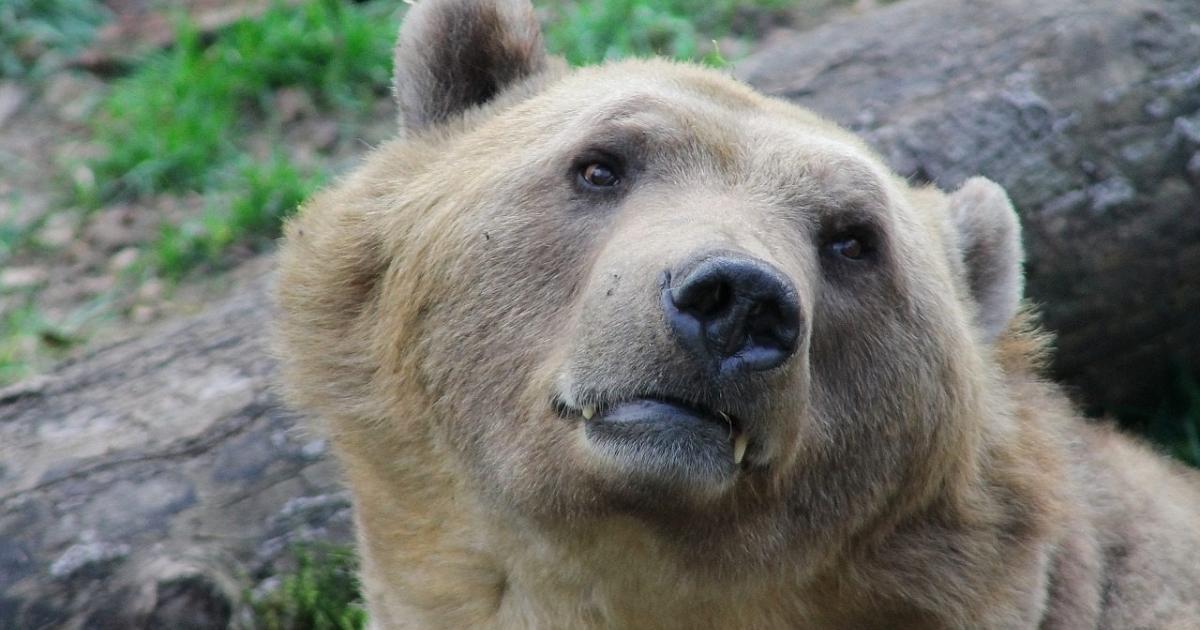 Οι δυο φίλοι και η αρκούδα