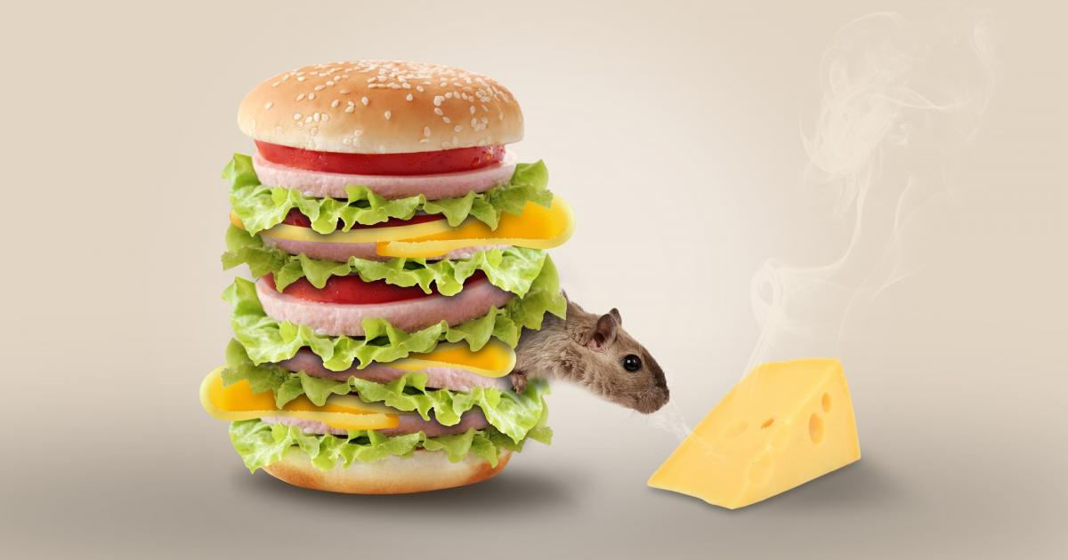 Αισώπου Μύθοι: Το λαίμαργο ποντίκι