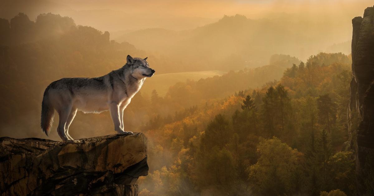 Μ. Σκαμπαρδώνη: Το πάθημα του λύκου (εικόνα pixabay)
