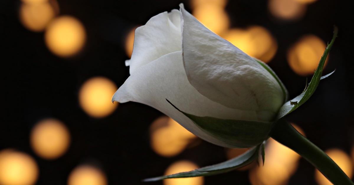 Η Πριγκίπισσα Σταλαχτίτα Και Το Μαγικό Λουλούδι, της Σοφίας Κουμαριανού