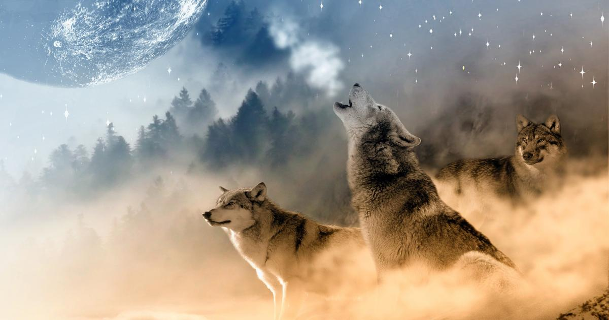 Μύθοι του Αισώπου: Ο Σκύλος και ο Λύκος