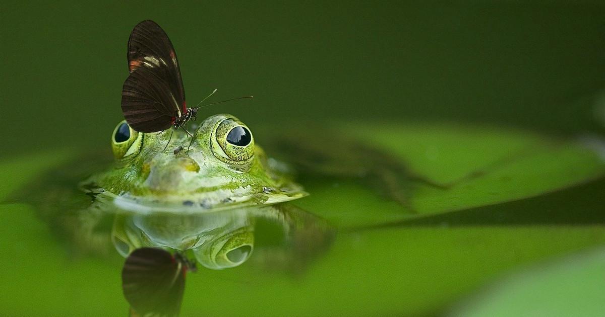 Παραμύθι: Η λιβελούλα και ο βάτραχος, της Αφροδίτη Χαραλαμπάκη