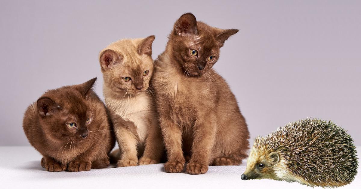 Παραμύθι: «Ο σκαντζόχοιρος και οι 17 γάτες» της Θεώνης Τζαμάκου